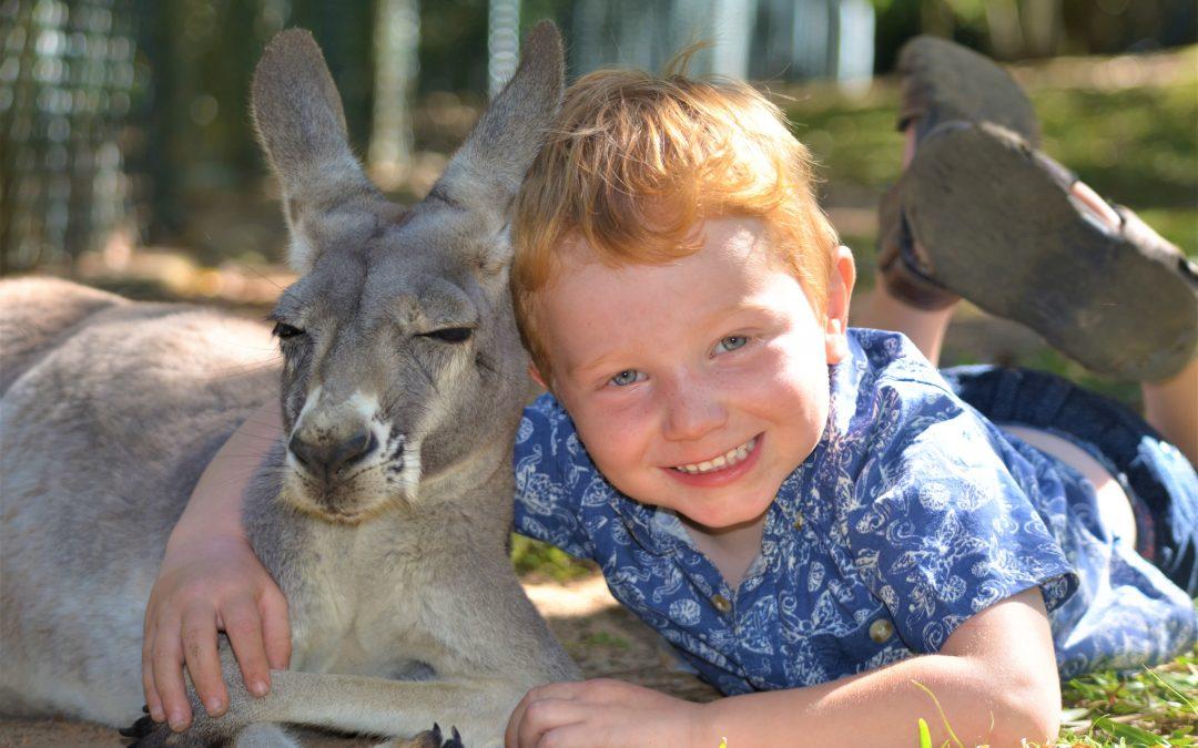 A tourists guide to Australian wildlife – Part 1 Mammals